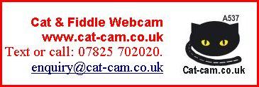 cat & fiddle webcam